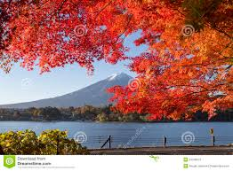 maple leaves change to autumn color at mt fuji japan stock image