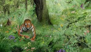 tiger in the jungle widescreen by yoklmn on deviantart