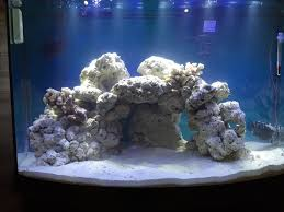 Floating Aquascape Reef2reef Saltwater And Reef Aquarium Forum - new to sw reef2reef saltwater and reef aquarium forum