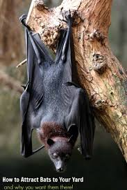how to attract bats to your yard and why you want them there