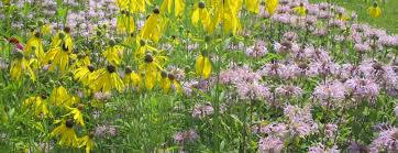 Landscape Nurseries Near Me by Edge Of The Woods Native Plant Nursery Specializing In Plants
