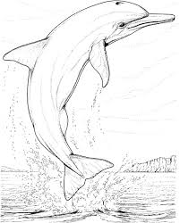free dolphin coloring pages animal coloring pages kids clip