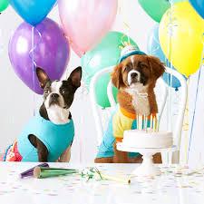 dog birthday party throw your pet a howling birthday party martha stewart