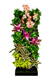 best 25 pothos vine ideas on pinterest kitchen plants window