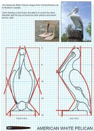 Wood Carving Patterns Free Printable by Plans For Wood Carving Birds Bing Images Carving Woodwork