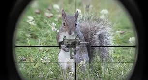 How To Hunt Squirrels In Your Backyard by Squirrel Hunting Less Fun When The Squirrel Has A Gun
