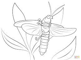 lightning bug coloring free printable coloring pages