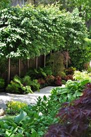 best 25 landscaping trees ideas on trees to plant