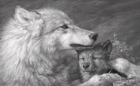 grey wolf paintings america