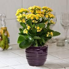 pretty pot plants 82 cool ideas for flower pots hanging rseapt