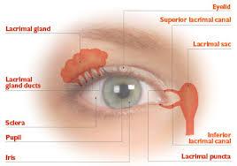 Eye Ducts Anatomy Understanding The Tear Film Eye Doctor Orlando Eye Institute