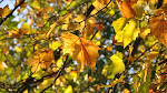 Autumn nature article nr