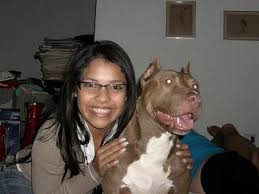 american pitbull terrier jaw fiapbt and iadcro recognition to u201cnipi u201d a american pit bull