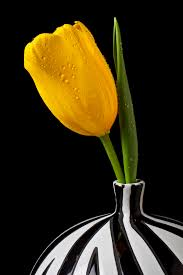 Striped Vase Yellow Tulip In Striped Vase Photograph By Garry