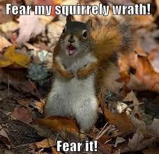 Squirrel Meme - squirrel meme nut rage