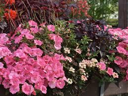 pflanzen fã r den balkon chestha dekor pflanzen balkon