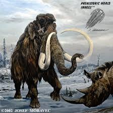 wooly mammoth prehistoric animals pleistocene