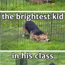 Silly Dog Meme - silly dog doesn t understand that wimpy fence isn t forever