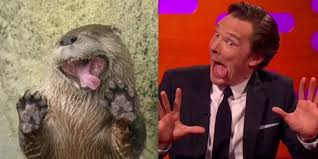 Cumberbatch Meme - benedict cumberbatch imitates otters who look like him the daily dot