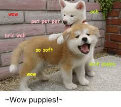 wow et pet pet bric wall so soft wow wow puppies puppies meme