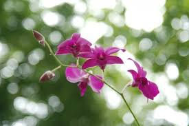Black Orchid Flower Black Orchid Free Stock Photos Download 3 815 Free Stock Photos