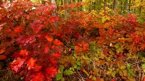fall colors collection beautiful autumn leaves forest