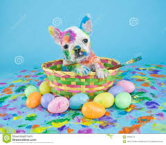 painted easter baskets painted easter puppy stock photo image 64929137