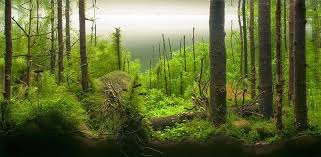 Mountain Aquascape The Incredible Art Of Underwater Landscaping For Aquariums