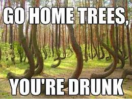 Tree Meme - funny tree meme go home trees you are drunk picture jpg 500纓376