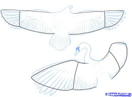 how to draw a flying bird how to draw a bird step by step birds