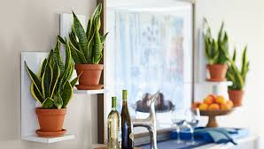 Lowes Wall Shelves by Wall Mounted Plant Shelves