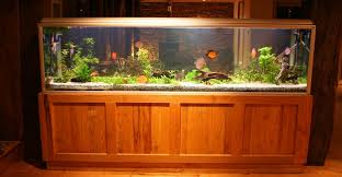 Aquarium Decorations Cheap 4 Best 55 Gallon Fish Tank Stands You Can Buy Right Now