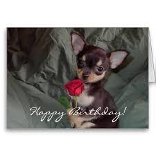 happy birthday chihuahua puppy card happy birthday birthdays