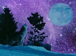 january wolf moon billie spiritual advisor