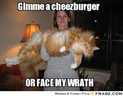 Cheezburger Meme Builder - cheezburger meme generator 100 images how to make a meme on