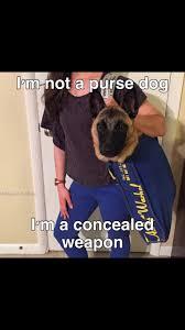 Funny German Shepherd Memes - s media cache ak0 pinimg com originals b7 7e f4