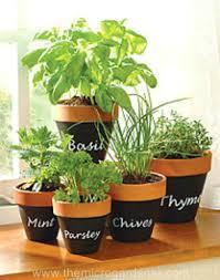 Indoor Herb Garden Ideas by Indoor Herb Garden Ideas Creative Juice