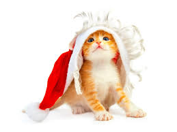 bichon frise funny christmas animals cute u0026 funny new images funny and cute animals