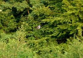 Wetter In Bad Vilbel über Uns Verein Für Vogelschutz Und Landschaftspflege Bad Vilbel