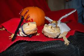 Bearded Dragon Halloween Costume Reptiles Costume Aussie Pythons Snakes