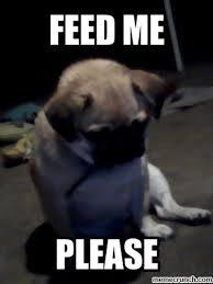 Feed Me Meme - image jpg w 400 c 1