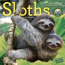 4 toed sloth sloths wall calendar 2017 cooke 9780761188001