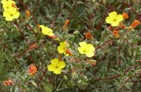 san diego county native plants san diego county native plant discoverers meetup san diego ca