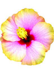 flowers international fleurs international flower trade association