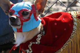nacho libre costume 40 fantastic animal costumes neatorama