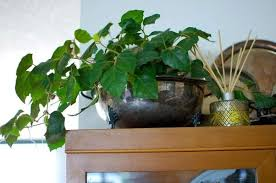 indoor trees that don t need light what are the best indoor plants to grow in india quora