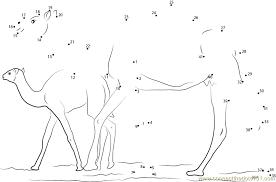baby camel sahara egypt dot to dot printable worksheet