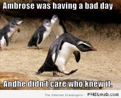 Meme Penguin - 13 funny penguin meme pmslweb