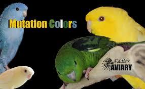 mutation colors u0026 pricing