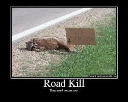 Funny Raccoon Meme - free raccoon funny road kill picture